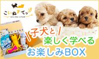 累計2万箱突破!子犬と楽しく学べるお楽しみBOX。獣医師監修【こいぬすてっぷ】